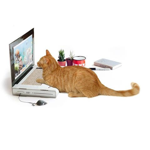 Cat, Felidae, Small to medium-sized cats, Technology, Whiskers, Electronic device, Tail, Tabby cat, Computer, Carnivore,