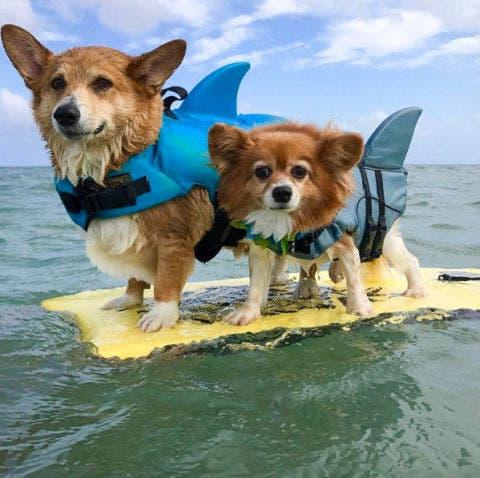 Dog breed, Dog, Vertebrate, Carnivore, Dog supply, Dog clothes, Mammal, Summer, Snout, Ocean,