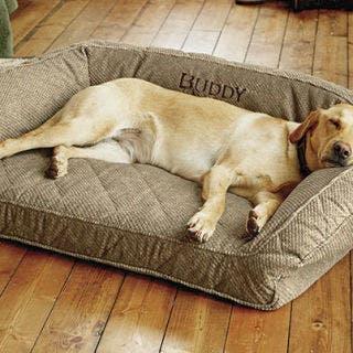 orvis memory foam best dog bed ever
