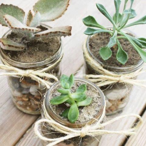 DIY Mason Jar Succulent