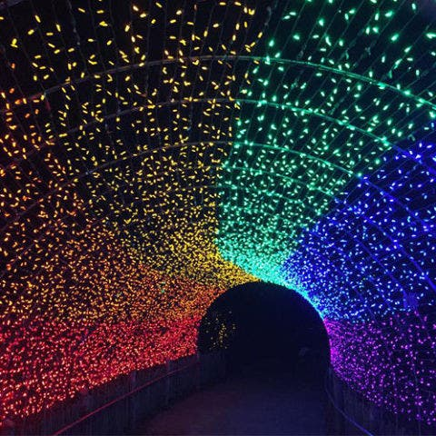 Cincinnati Zoo Festival of Lights — Cincinnati, Ohio