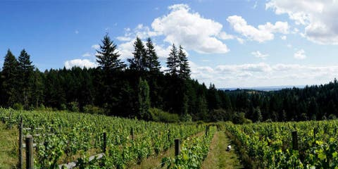 Helvetica Winery — Hillsboro