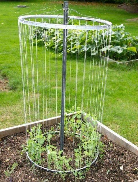 Grass, Leaf, Soil, Garden, Groundcover, Terrestrial plant, Grass family, Shrub, Annual plant, Herb,