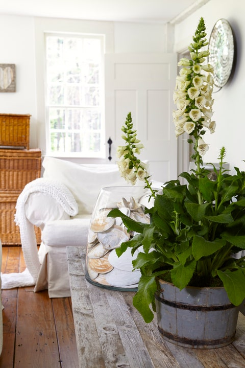 Room, Interior design, Interior design, Home, Flowerpot, Hardwood, Living room, Houseplant, Home accessories, Pillow,
