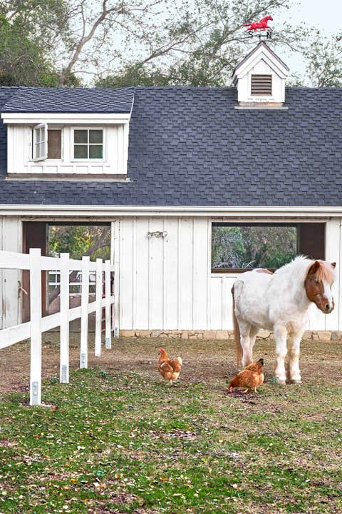 House, Vertebrate, Home, Real estate, Residential area, Dog, Working animal, Carnivore, Home fencing, Roof,