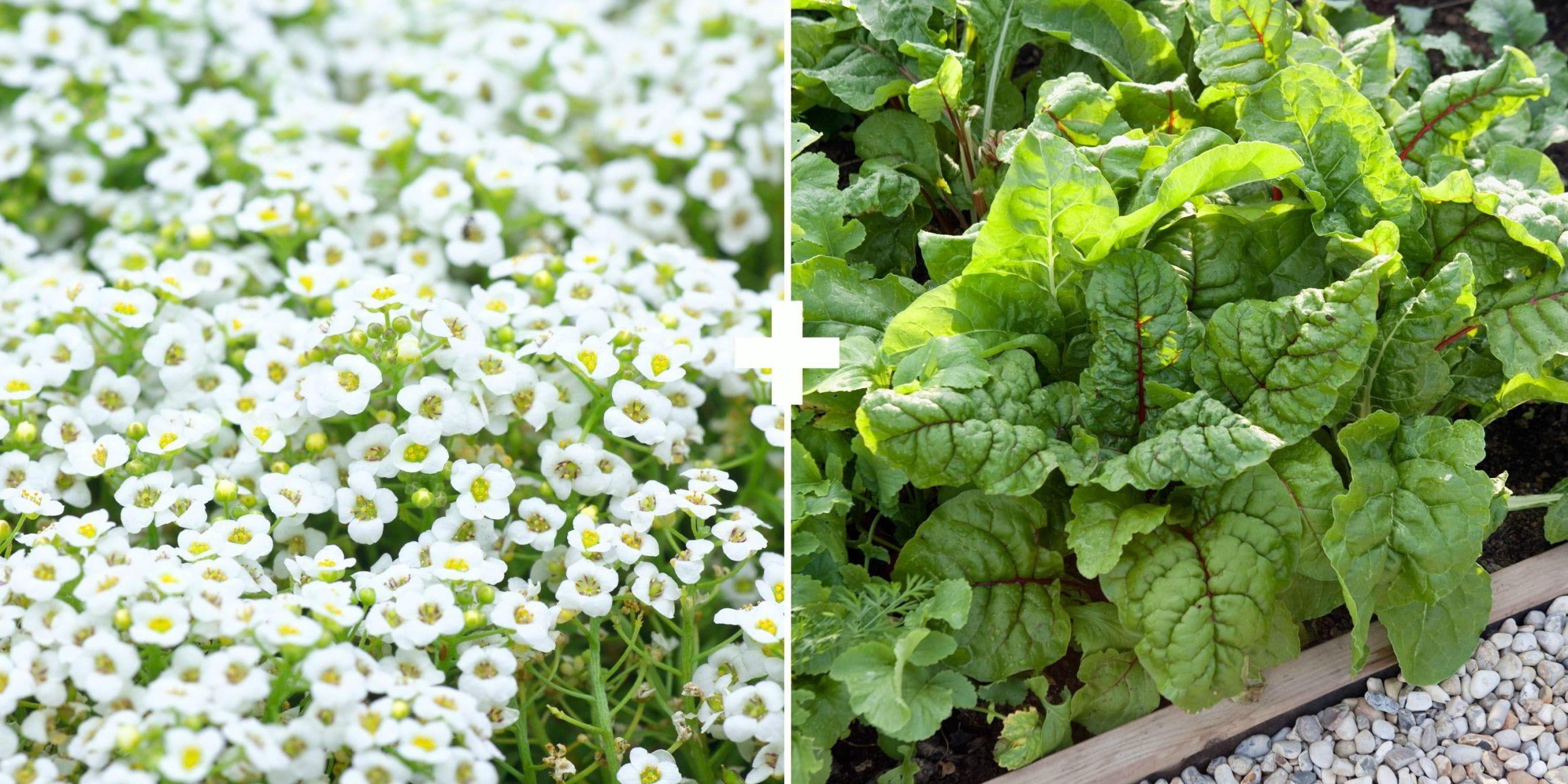 Flower, Plant, Flowering plant, Leaf, Herb, Groundcover, Leaf vegetable, Food, Vegetable, Annual plant,