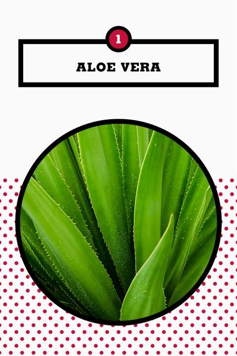 Leaf, Green, Plant,