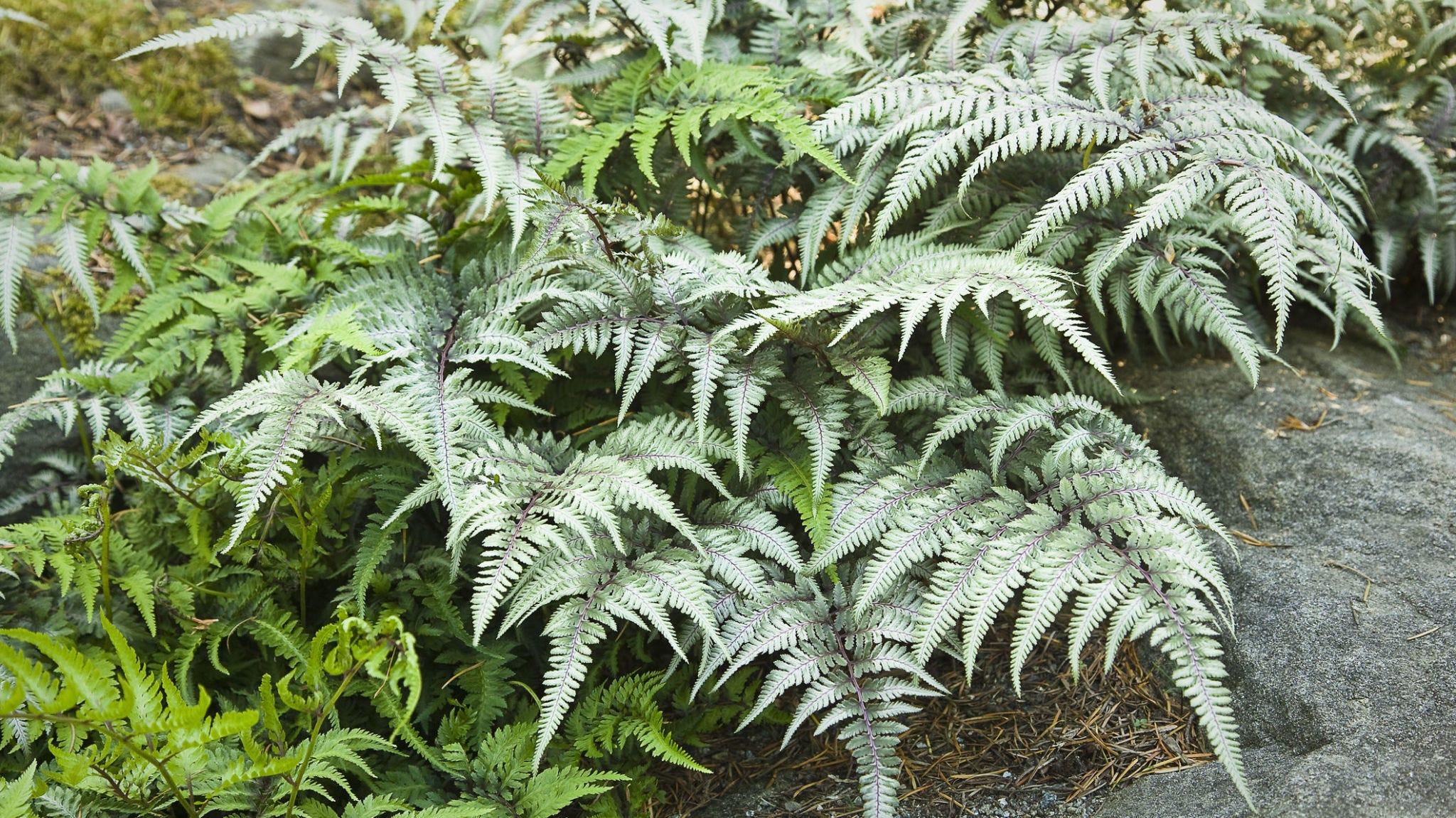 Plant, Vegetation, Terrestrial plant, Flower, Leaf, Ferns and horsetails, Vascular plant, Tree, Fern, Botany,