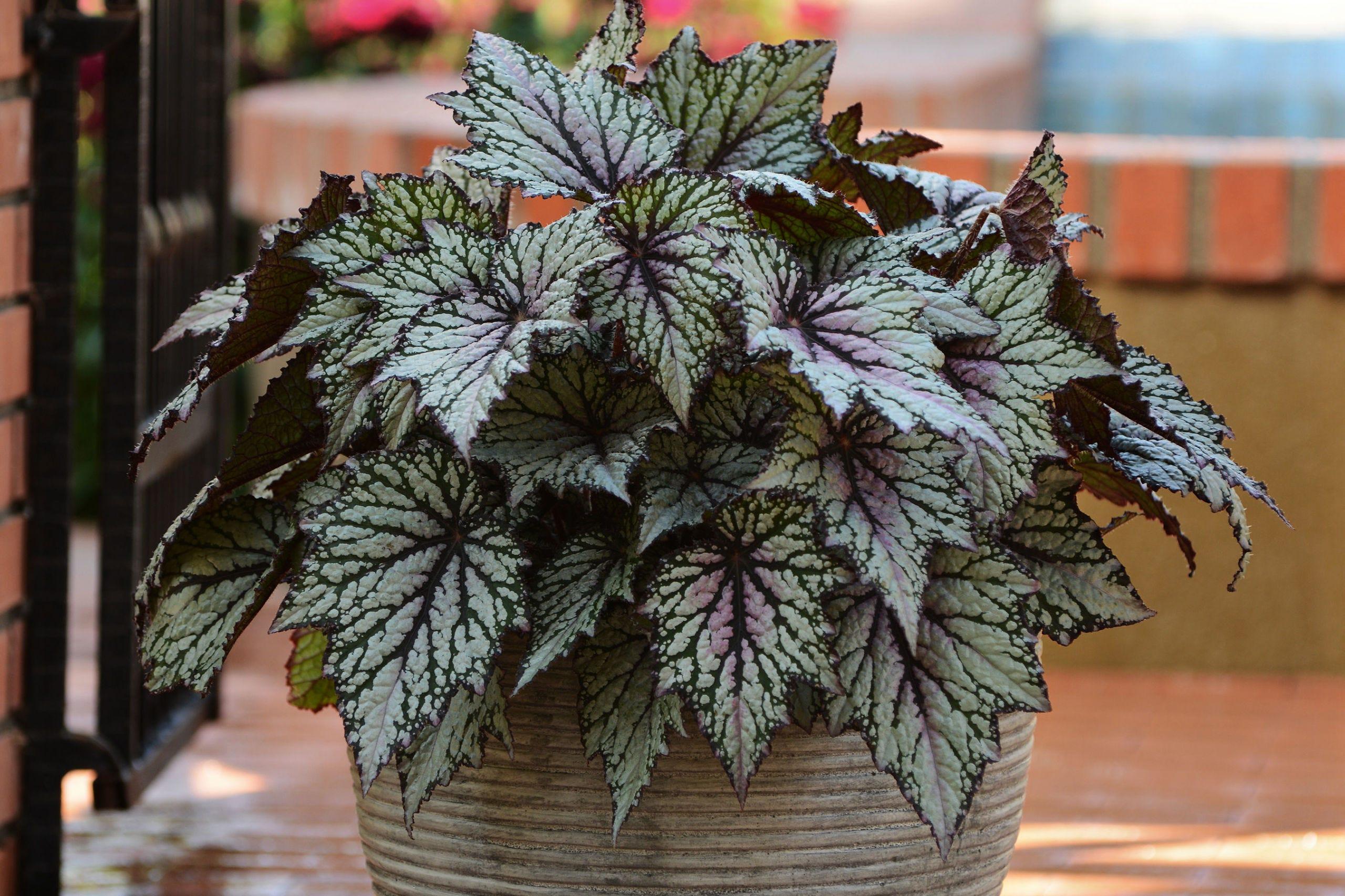 Flowerpot, Flower, Green, Plant, Houseplant, Botany, Leaf, Herbaceous plant, Table, Window,