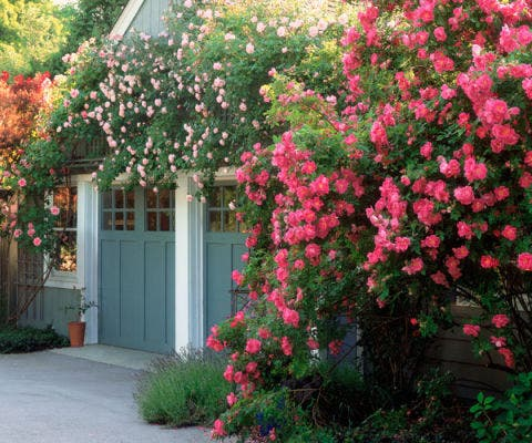 garage with climbing roses