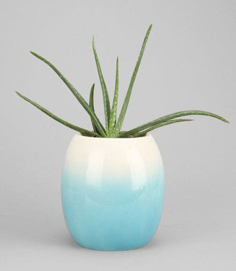 Blue, Green, Flowerpot, Teal, Aqua, Turquoise, Botany, Azure, Vase, Still life photography,