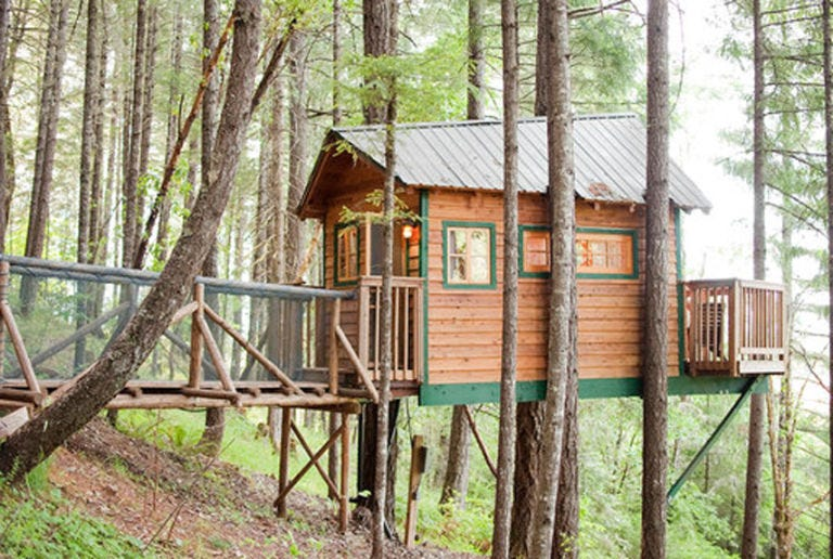 Wood, Plant, Woody plant, Rural area, Forest, Tree house, Trunk, Human settlement, Log cabin, Woodland,