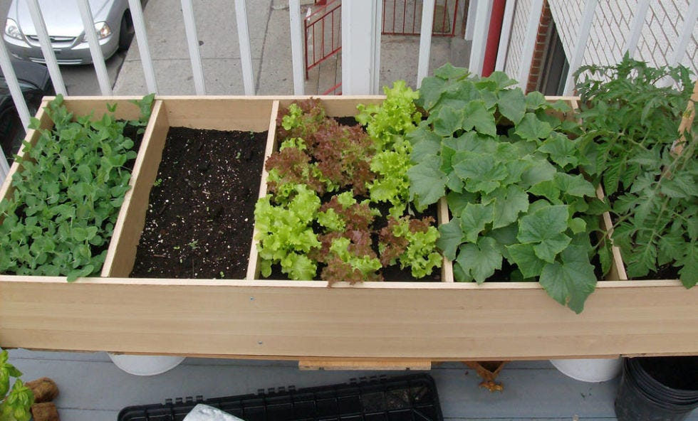 Leaf, Annual plant, Herb, Vehicle registration plate, Whole food, Produce, Grapevine family, Parking, Compost, Leaf vegetable,