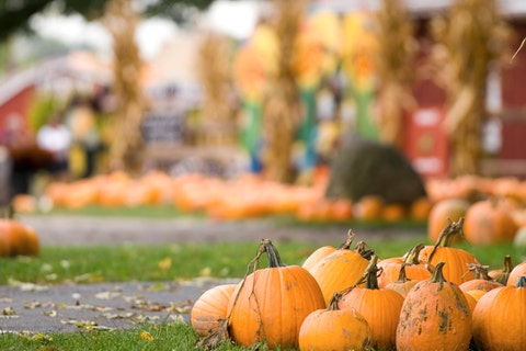 best fall festivals coconut grove pumpkin patch festival
