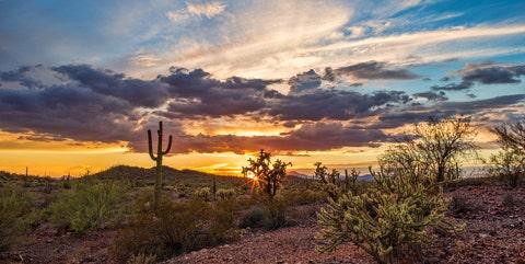 Sonoran Desert - Phoenix, Arizona