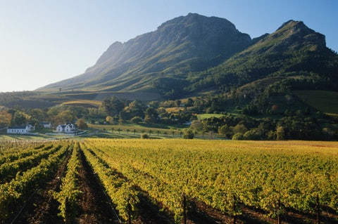 shot in the boland district,  the franschhoek valley is one of the leading wine growing regions of the country