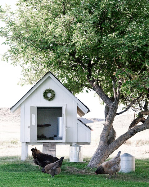 A Small Raised White Chicken Coop