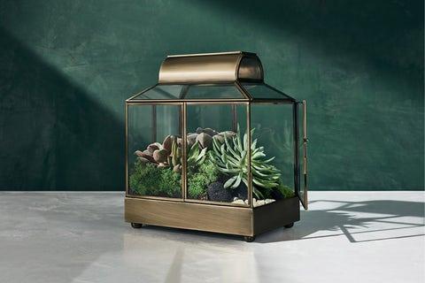 hilton carter x target plants