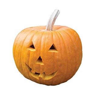 Jack O' Lantern Pumpkin Seeds