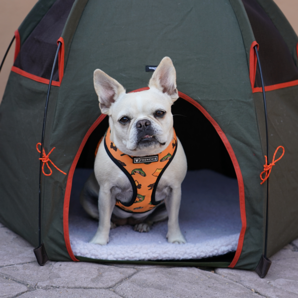 Frenchie Duo Reversible Harness - Happy Camper