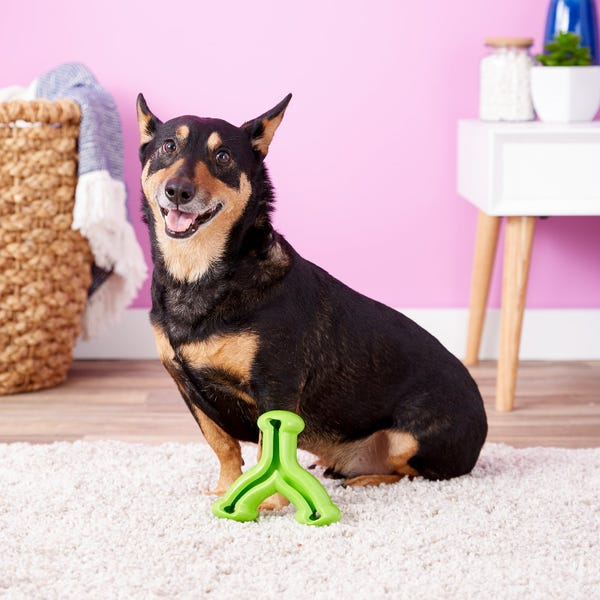 KONG Quest Wishbone Dog Toy, Color Varies