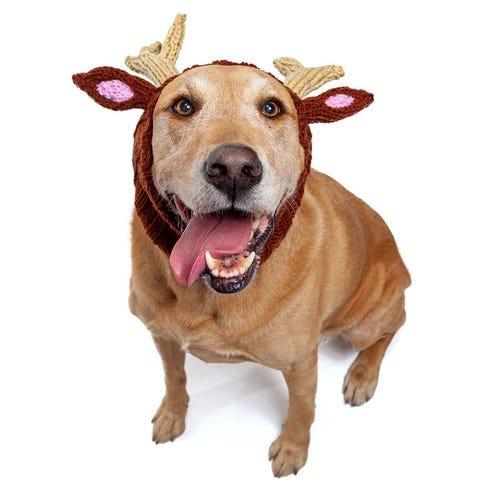 Reindeer Dog Snood   Knit Crochet Dog Hat with Antlers   Halloween Dog Costume   Ear Warmer