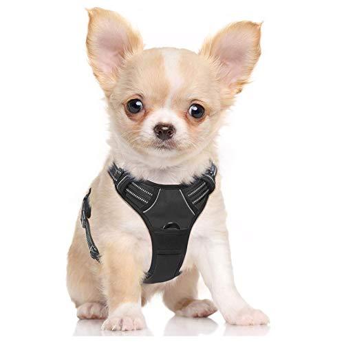 rabbitgoo Dog Harness, No-Pull Pet Harness with 2 Leash Clips