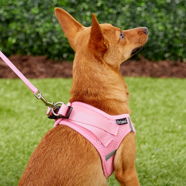 Frisco Small Breed Soft Vest Step In Back Clip Dog Harness