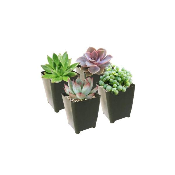 Succulents Pack for Beginners