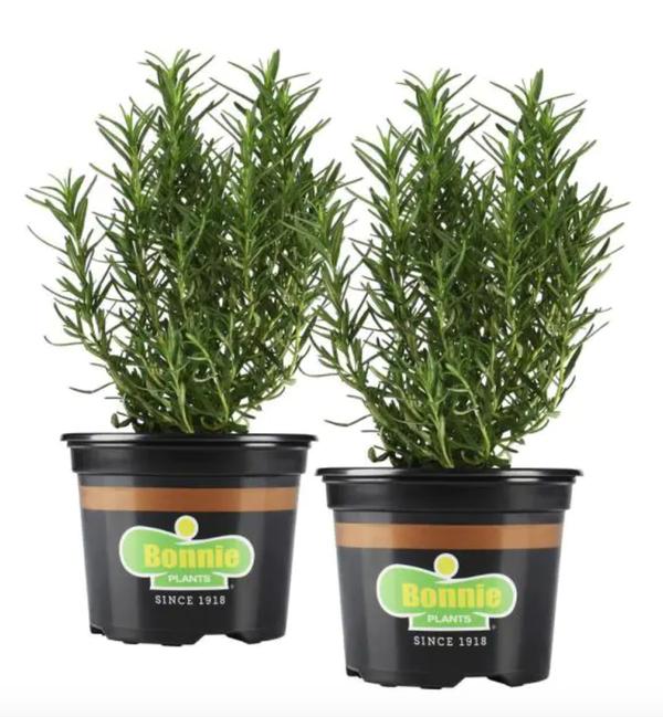 25 oz. Rosemary (2-Pack)