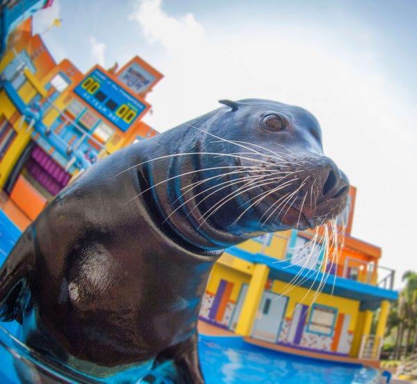 Buy SeaWorld Tickets