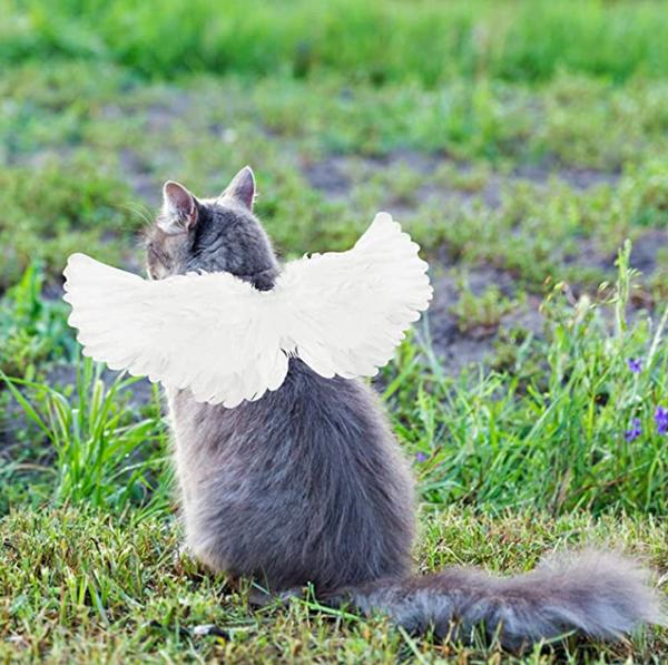 Pet Halloween Angel Costume