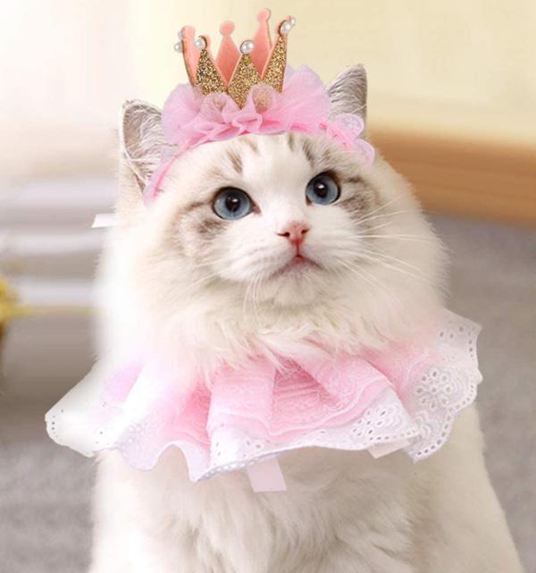 Cat Crown Accessories