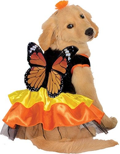 Dog Monarch Butterfly Costume