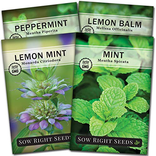 Sow Right Seeds - Mint Garden Seed Collection