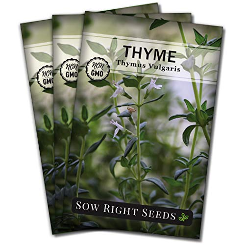 Sow Right Seeds - Thyme Seed for Planting