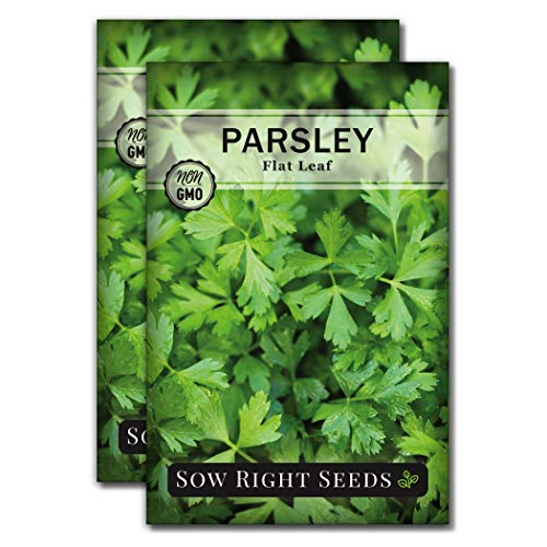 Sow Right Seeds - Flat Leaf Parsley Seed for Planting