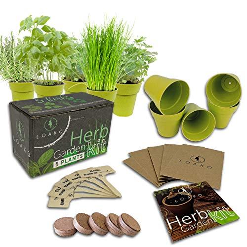 Indoor Herb Garden Starter Kit - 5 Herb Seeds